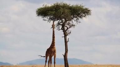 Africa a collection of photos