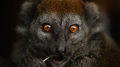 Madagascar - Wildlife and Green Treasures of the Red Island