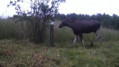 Time lapse   Several months from moose mineral lick