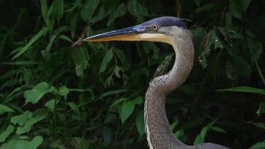 Wildlife of Arkansas