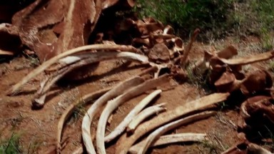 Wildlife Conservation Kenya