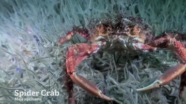 Ulster Wildlife - Living Seas - Short Version