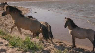 Wild Horses 4K