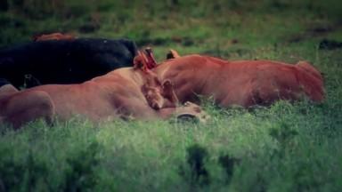 ANIMAL SOCIETY 06