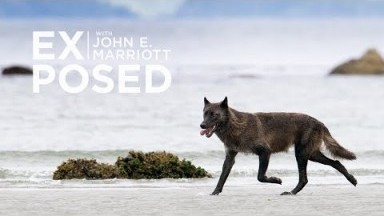 A Wildlife Photography Expedition in Search of the Elusive Sea Wolf!