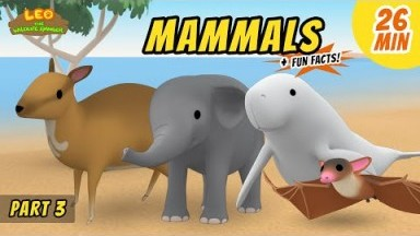 Mammals (Part 3/8) - Fun, Exciting Animals Stories for Kids | Educational | Leo the Wildlife Ranger