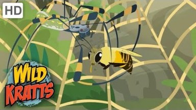 Wild Kratts | Creatures HUNTING|Spiders