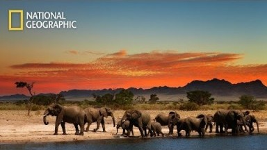 National Geographic Documentary 2020 HD - Wild Africa
