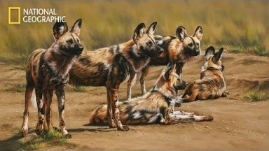 National Geographic Documentary 2020 HD - The Pack Wild Dogs
