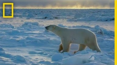 Wildlife with Bertie Gregory: The Big Freeze | National Geographic