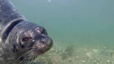 Curious Harbor Seal