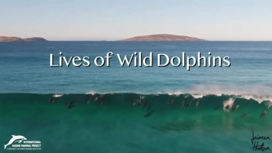Lives of Wild Dolphins  - Help Mojostreaming celebrate National Dolphin Day!