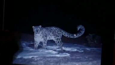 National Geographic Documentary   The Snow Leopard   Wildlife Animals