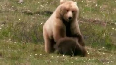 Wildlife Safety  Alaska  how to protect yourself from a bear