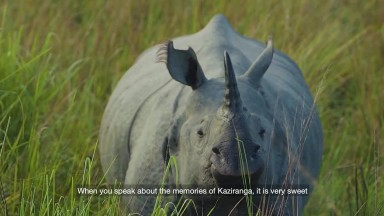 My Way or The Highway  A Documentary on the Protection of Wildlife Corridors in Kaziranga