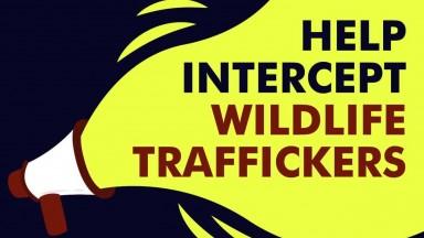 ROUTES Partnership  Wildlife Trafficking Awareness Training Video 720p