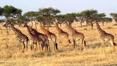 AFRICAN SAFARI WILDLIFE   Safari Visit for African Animals Documentary