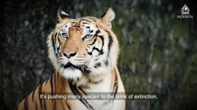 Wildlife crime  closing ranks on serious crime in the illegal animal trade