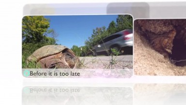 The Snapping Turtle  Ontario Wildlife Video Series