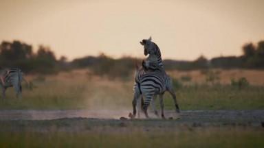 Behind the Scenes of Wildlife Filmmaking in Botswana (4K UHD)