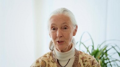 Dr  Jane Goodall   Every animal is an individual.    H.O.P.E. What You Eat Matters.