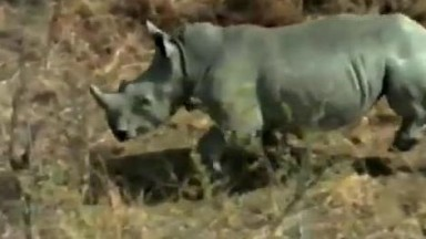 WILDLIFE WARRIORS by The Botswana Defense Force