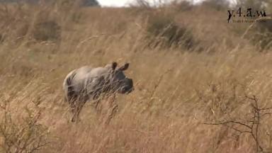 The Rhinos  Last Shot