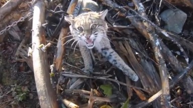 AMAZING Rescue Wild Animals from Poaching Traps