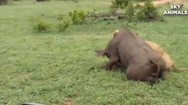 wild animals fight for survival