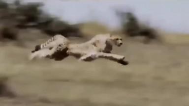 Biggest Wild Animal Fights