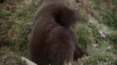 The Bear (1988)