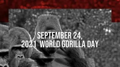 World Gorlla Day