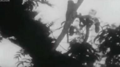 Zoo Quest For A Dragon   S01   E02   Borneo   Part 02